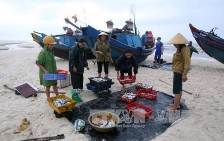 """2017年越南海洋岛屿周:""""绿色海洋经济""""管理与发展 hinh anh 1"""