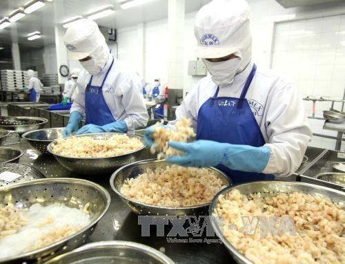 澳大利亚同意复进口于越南加工的虾类 hinh anh 1