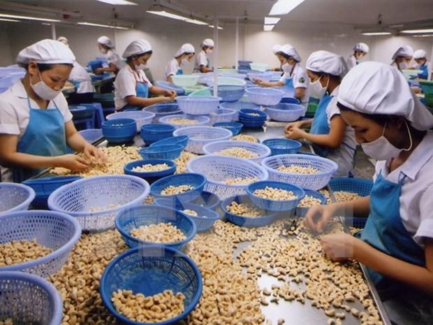 2017年越南腰果出口额力争达33亿美元 hinh anh 1