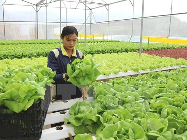 革新农业发展的思维 推动农业可持续发展 hinh anh 1