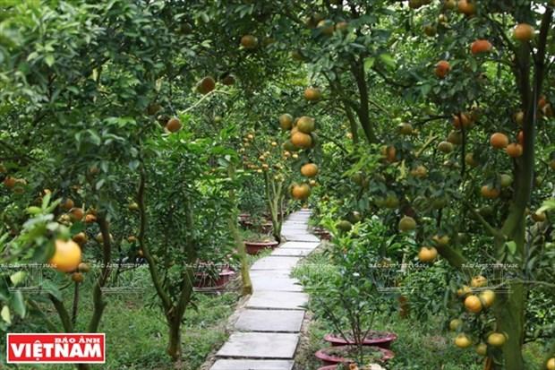 莱翁红橘王国 hinh anh 10