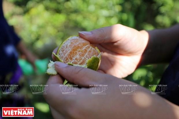 莱翁红橘王国 hinh anh 6