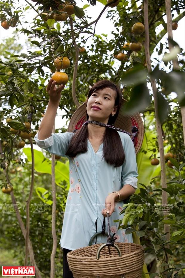 莱翁红橘王国 hinh anh 9