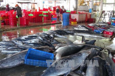 越南远洋捕捞行业发展提案意见征求会在巴地头顿省举行 hinh anh 1