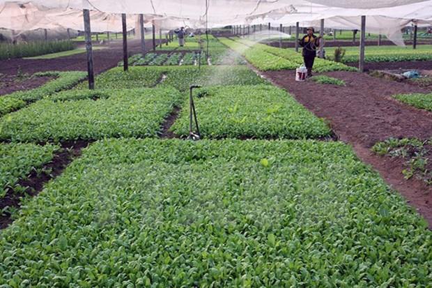 河内市将为各家企业对高科技农业投资创造便利 hinh anh 1