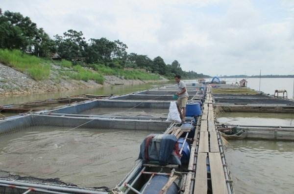 富寿省朝着商品生产方向推动水产养殖业发展 hinh anh 1