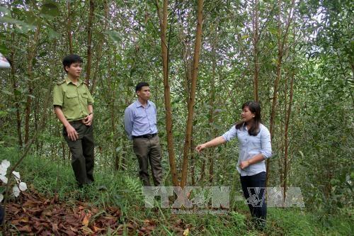 2017年全国林产品出口金额预计达逾75亿美元 hinh anh 1