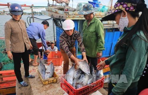 越南中部四省海洋环境质量总体稳定 hinh anh 1