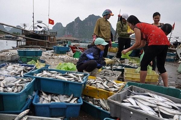 越南中部四省海洋环境质量总体稳定 hinh anh 2