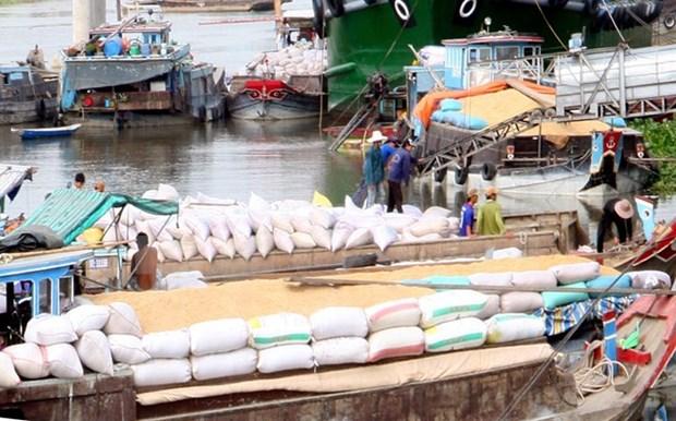 越南力争2017年大米出口量达570万吨 hinh anh 1