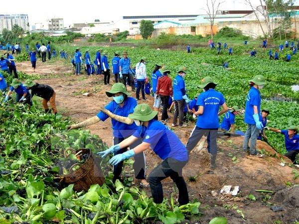 6万名青年志愿者参加2017年绿色夏季志愿者活动 hinh anh 1