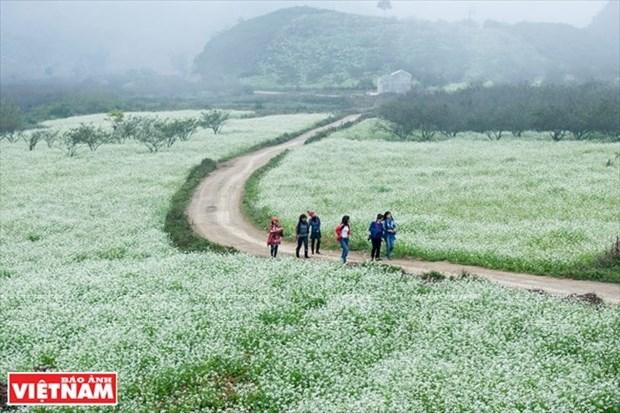木州高原上的体验游 hinh anh 2