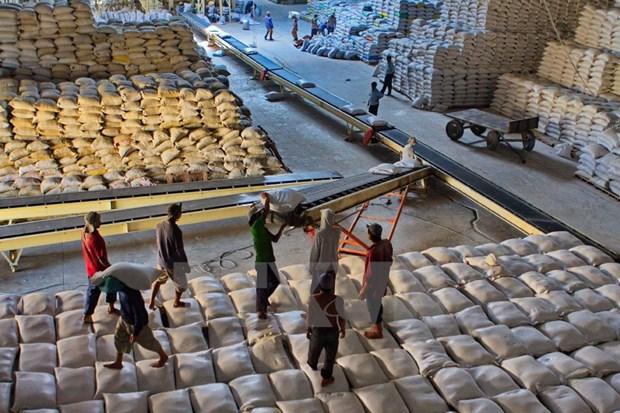 越南粳米出口激增 hinh anh 1