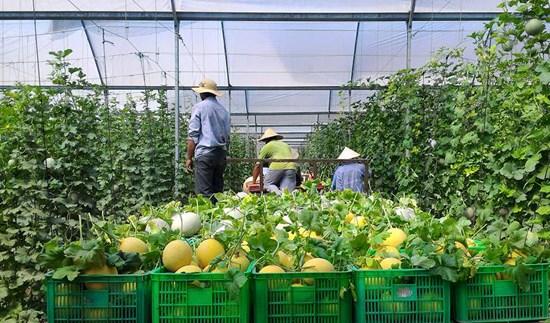 亚行:可持续农业有助于提升越南的地位 hinh anh 1
