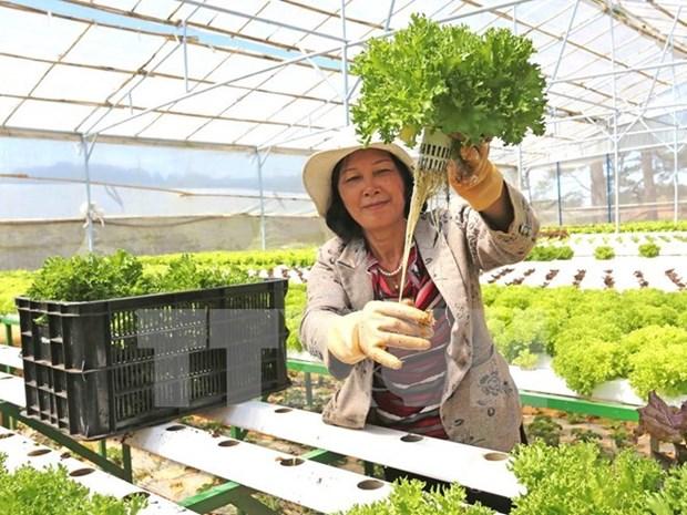 扩大越南农产品的出口范围:越南力争实现2017年农产品出口额约达330亿美元的目标 hinh anh 2
