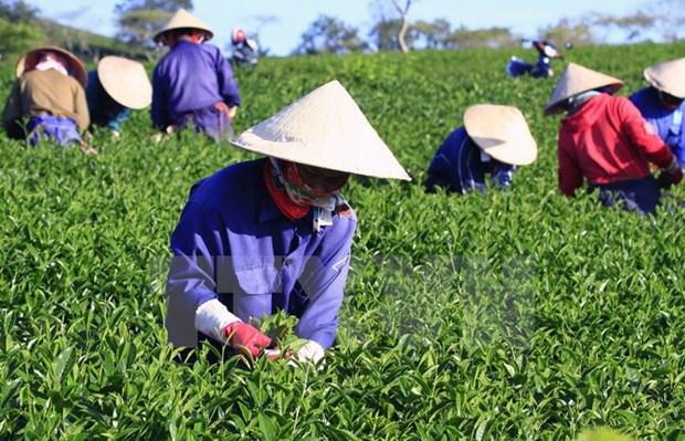 扩大越南农产品的出口范围:发挥活跃创新精神以渡过难关 hinh anh 3