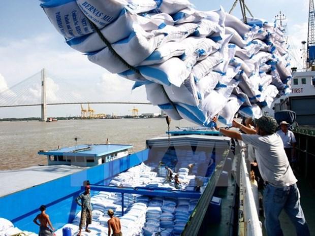 越南企业中标对菲律宾出售17.5万吨大米 hinh anh 1