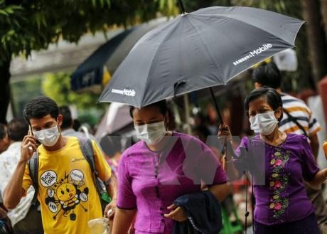缅甸爆发禽流感和猪流感 hinh anh 1