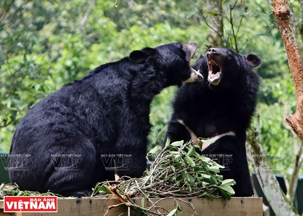 黑熊的新屋 hinh anh 3