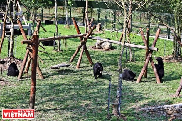 黑熊的新屋 hinh anh 1