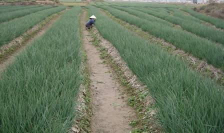 36家外资企业斥资10亿美元对同奈省农业领域进行投资 hinh anh 1