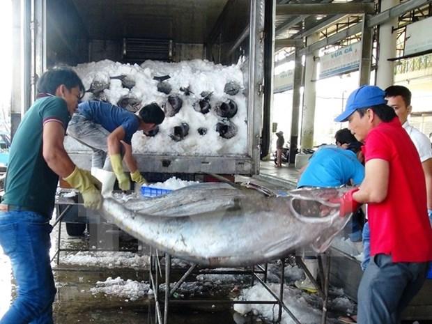 越南金枪鱼产品出口到世界97个国家 hinh anh 1