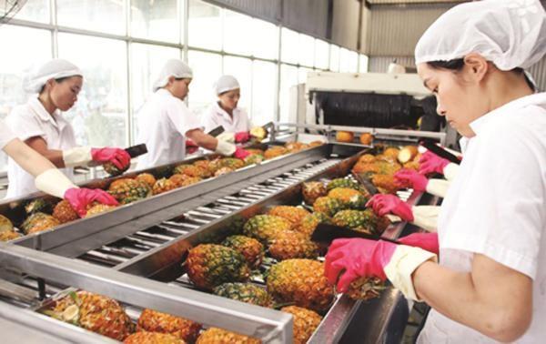 越南水果扩大出口市场 hinh anh 1