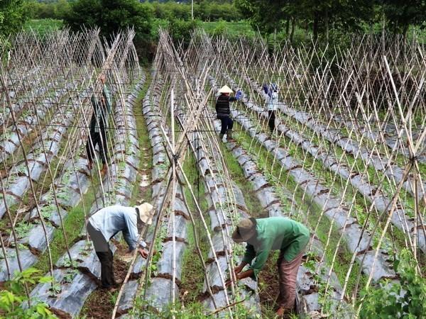 越南为合作社发展营造便利环境 hinh anh 1
