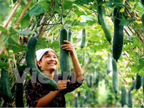 2017年越南种植业增长率可达2%以上 hinh anh 1