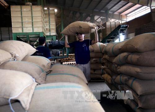 前8月越南农业实现44.9亿美元贸易顺差 hinh anh 1