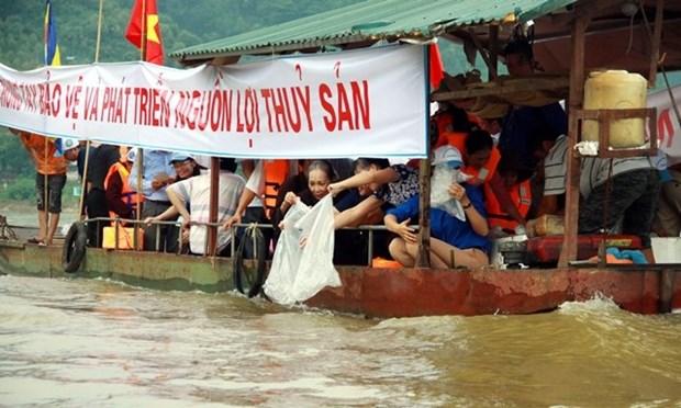 越南在泸江上放生1.2吨鱼苗 恢复水产资源 hinh anh 1