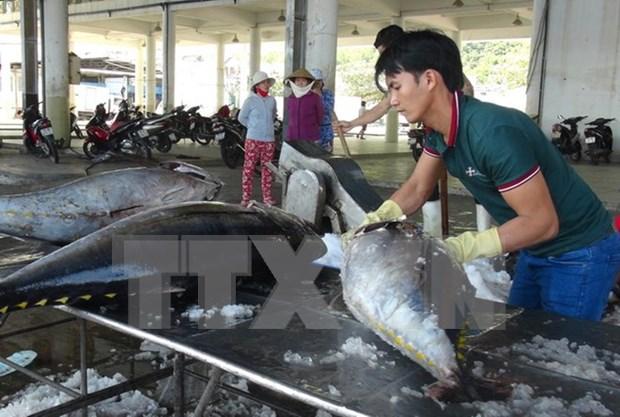 今年前8月越南水产捕捞产量增加 hinh anh 1