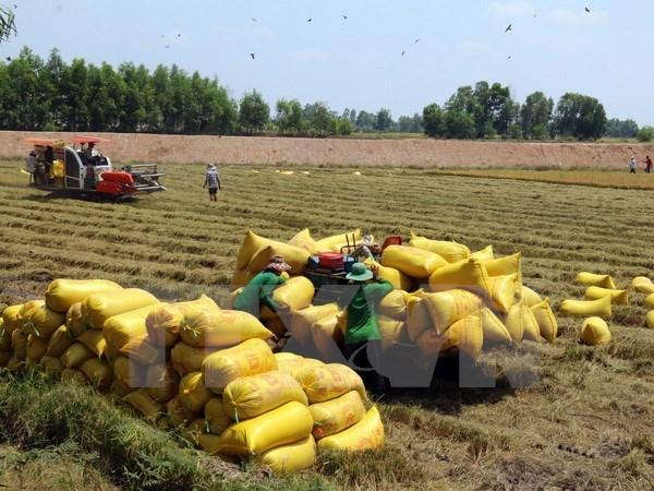 芹苴市与澳大利亚企业合作 提升大米出口能力 hinh anh 1