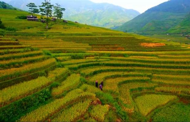 越南旅游业努力加强国内外旅游目的地的对接 hinh anh 1