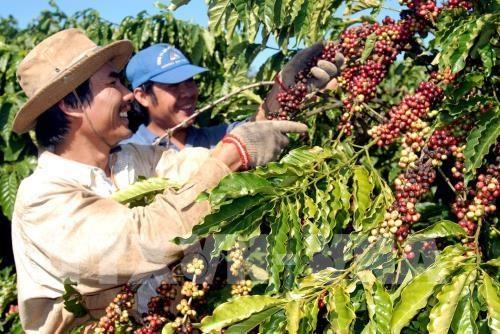 越南对阿尔及利亚出口增长26% hinh anh 1