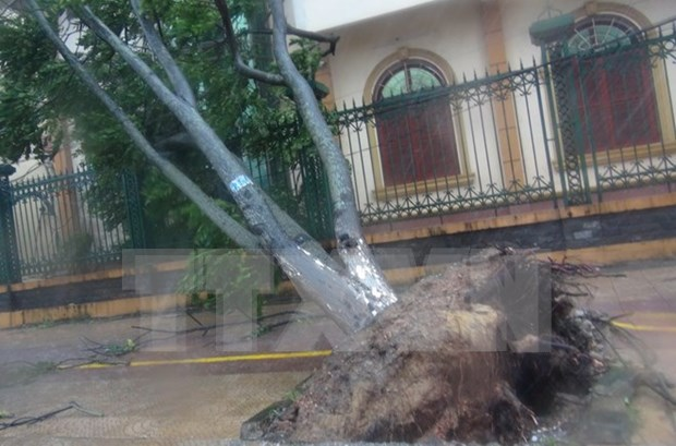 第十号台风登陆广平省 造成7人死亡和受伤 hinh anh 1