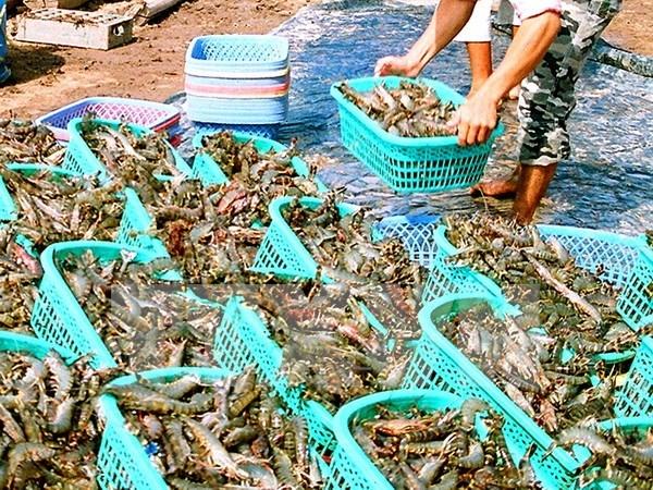 越南力争到2020年水产品出口总额达80亿至90亿美元 hinh anh 1