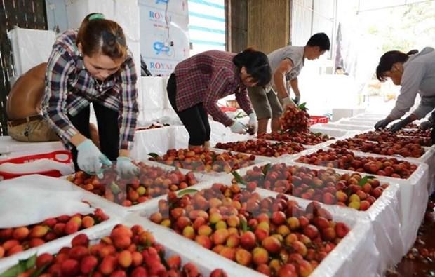 越南农产品努力进军韩国市场 hinh anh 2