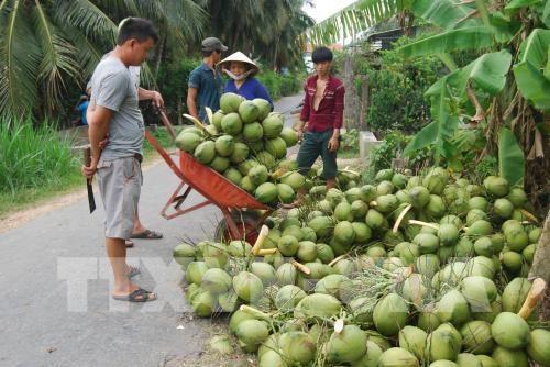 越南槟椥省的主要商品出口额保持良好增长势头 hinh anh 3