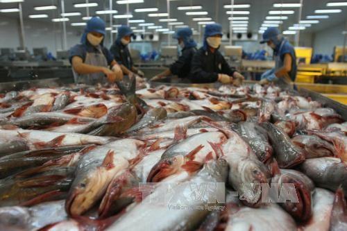 首届查鱼展销会即将开幕 成为对接拓展国际市场的机会 hinh anh 1