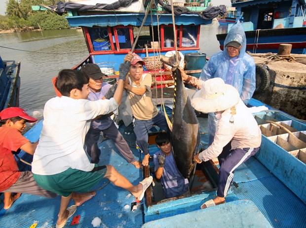 广宁省协助渔民造船 服务于远洋捕捞作业 hinh anh 2