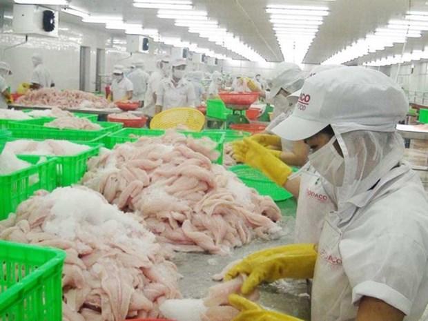九龙江平原地区原料茶鱼价格猛涨 hinh anh 1