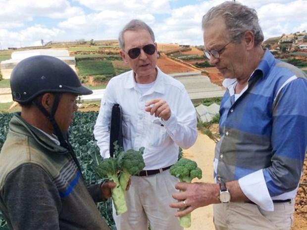 荷兰高级专家组织:荷兰专家愿赴越分享可持续发展经验 hinh anh 1