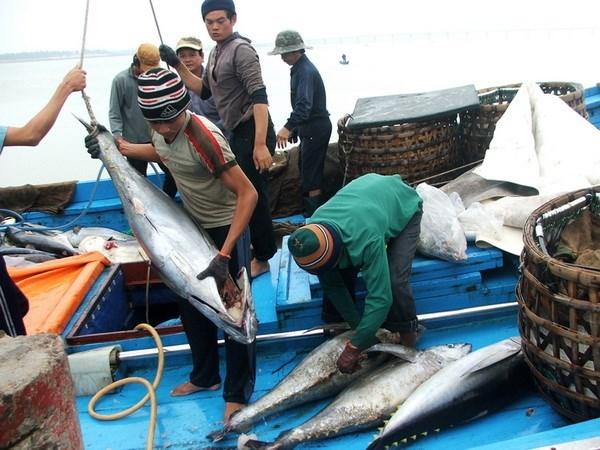 越南前九月水产捕捞量同比增长5.2% hinh anh 1