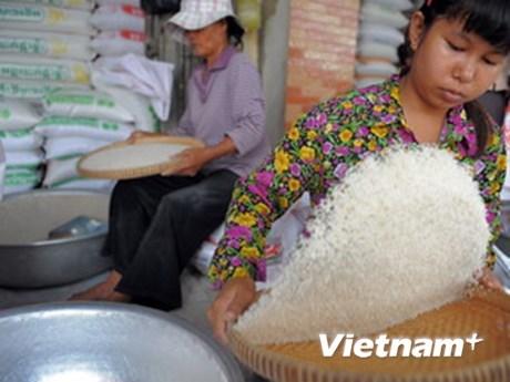 柬埔寨大米出口量继续增加 hinh anh 1