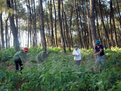 截至目前越南森林环境服务费收入超1万亿越盾 hinh anh 1