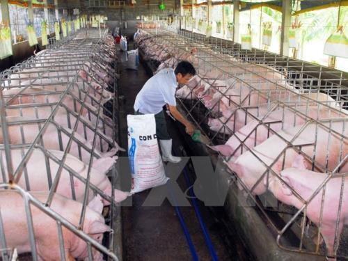 越南Olmix Asialand有限公司饲料添加剂生产厂投入运营 hinh anh 1