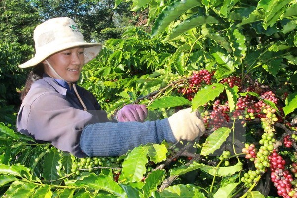 今年前9月越南对阿尔及利亚出口额增长17% hinh anh 1