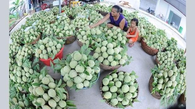 2017年北部山区与丘陵地区贸易农业展销会在北江省举行 hinh anh 1