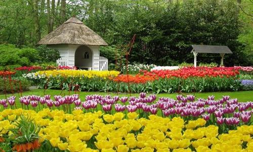 2017年第七届大叻花卉节将于12月底在林同省举行 hinh anh 1